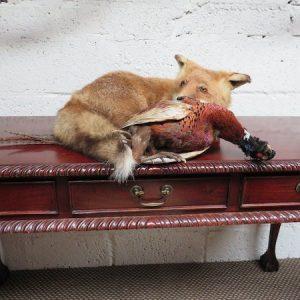 Taxidermy Irish Fox & Pheasant